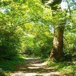 DIRECCION DE MEDIO AMBIENTE-ORDENANZA Nº 290/05 PRESERVACION DE PLANTACIONES FORESTALES Y ORNAMENTALES Y FLORALES