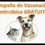 CAMPAÑA DE VACUNACION ANTIRRABICA